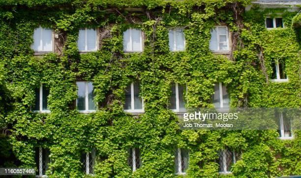 green apartments - lombardia foto e immagini stock