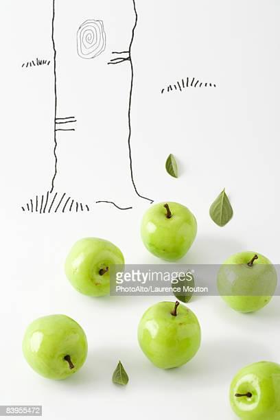 Green apples below drawing of tree trunk