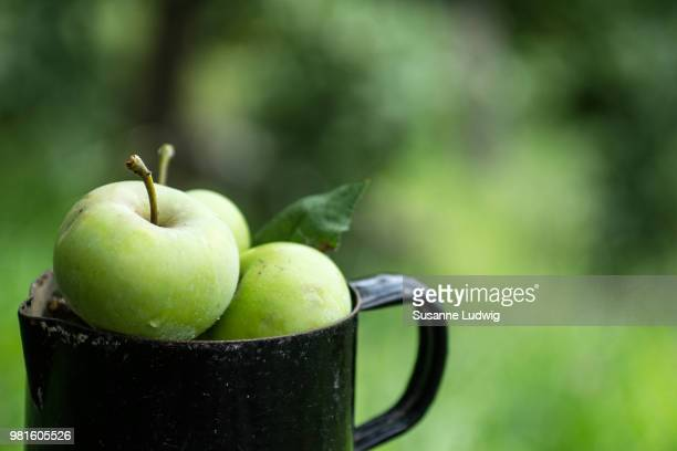 green apples (malus domestica) in decanter - susanne ludwig stock pictures, royalty-free photos & images