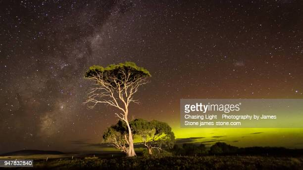 green arc of aurora and the milky way with over an illuminated tree - aurora australis stock pictures, royalty-free photos & images