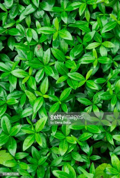 green background - abundance stock pictures, royalty-free photos & images
