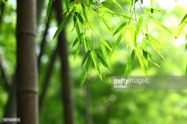 green bamboo leaves background - bamboo forest stock photos and pictures