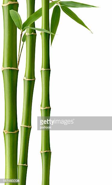 Grüne Bambus