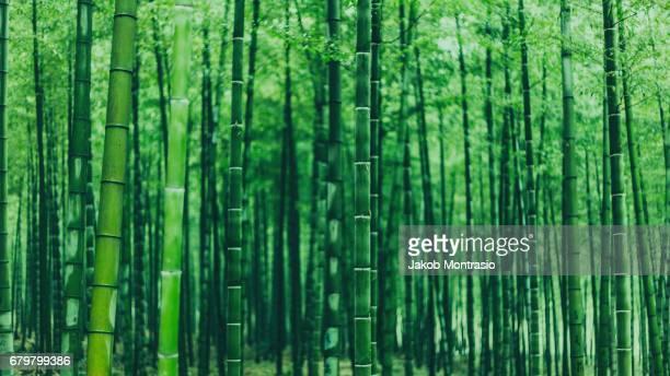green bamboo - folha de bambu - fotografias e filmes do acervo