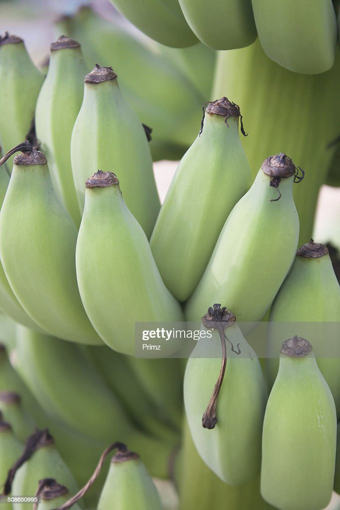 green banana on tree from thailand : Stock Photo