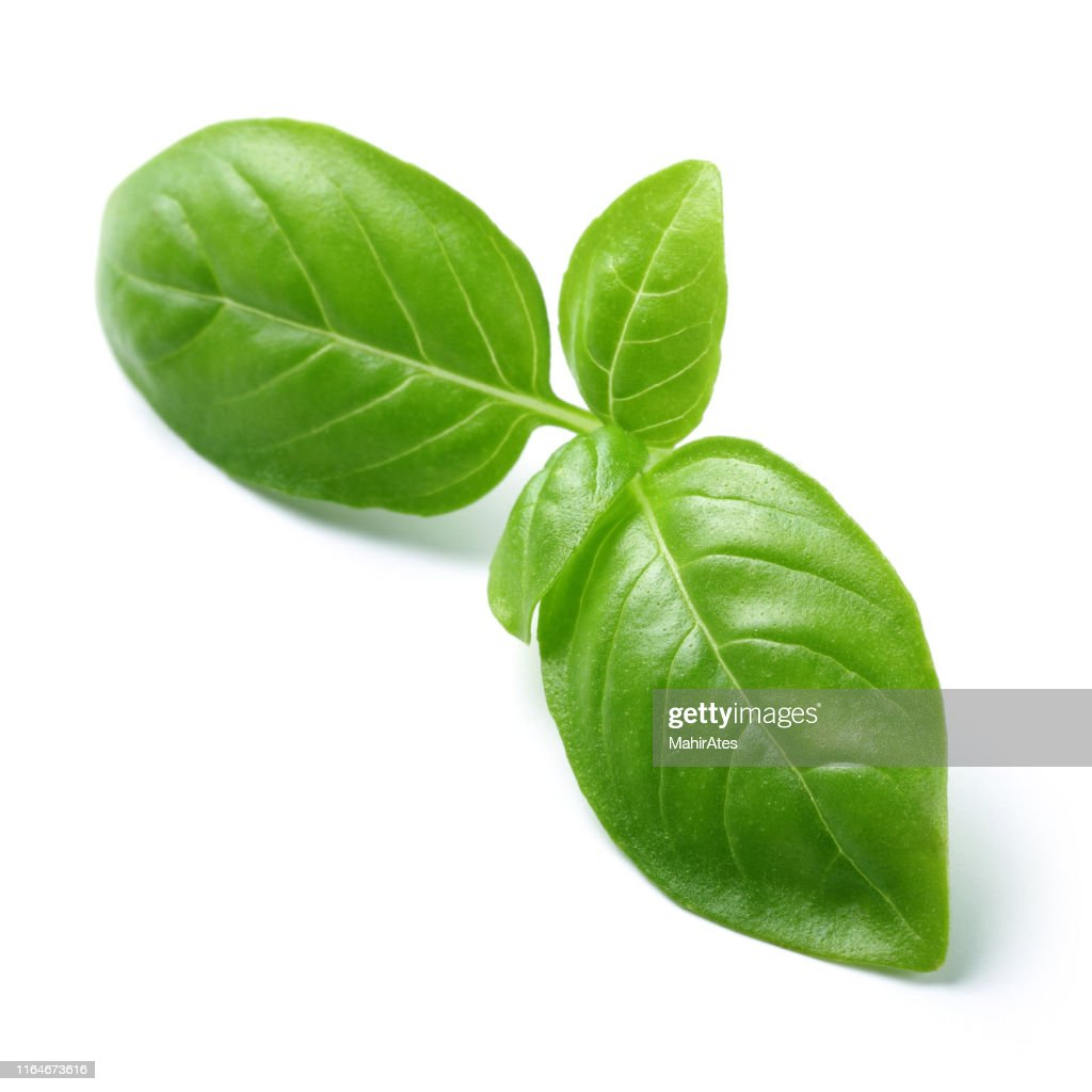 Green basil leaves isolated on white : Stock Photo