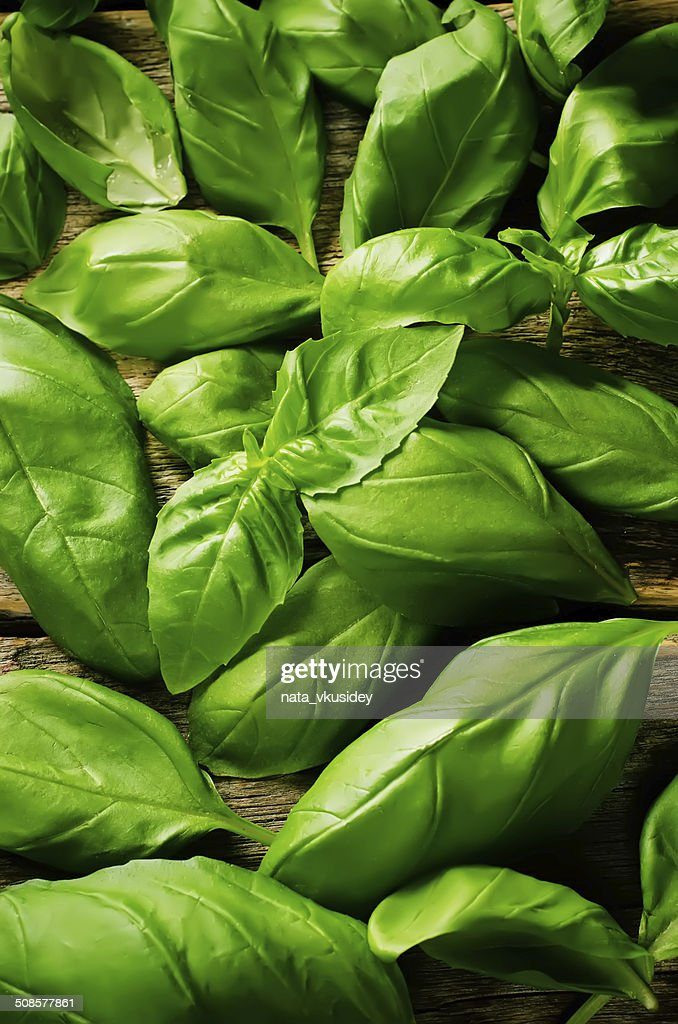 green Basil : Stock Photo