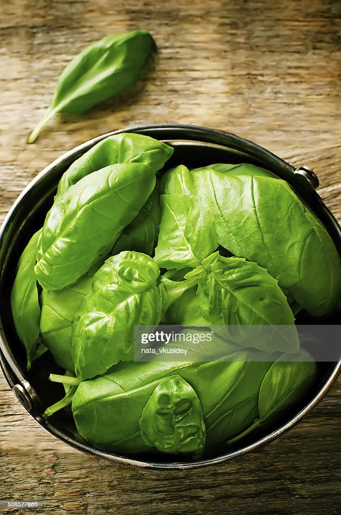 green Basil : Stock Photo