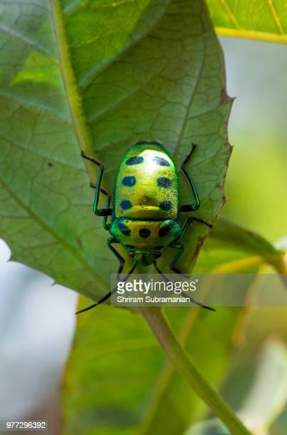 Green Beetle 2