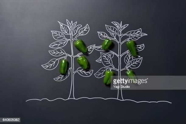 green bell pepper and blackboard - pimiento verde fotografías e imágenes de stock