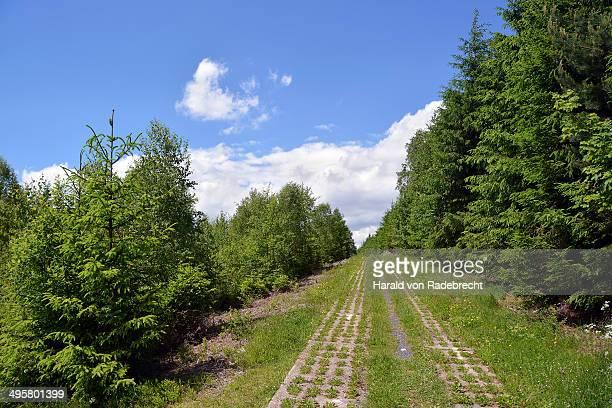 Green Belt, former inner-German border patrol path with the overgrown death strip, Rennsteig, Lehesten, Thuringia, Germany