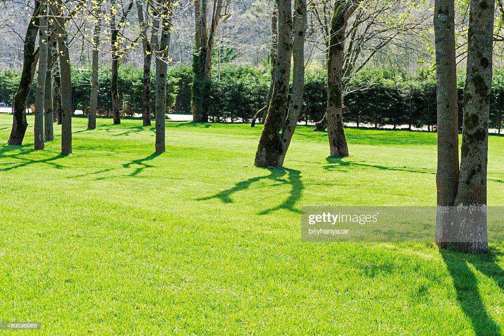 Green big garden : Stock Photo