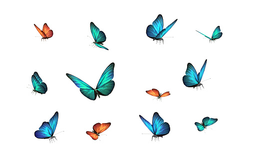 green, blue and red butterfly isolated on white back ground 1181430865