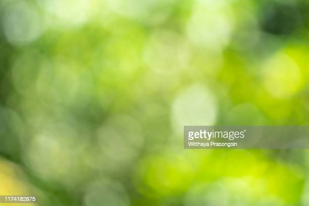 green blurred background and sunlight - green colour stock pictures, royalty-free photos & images