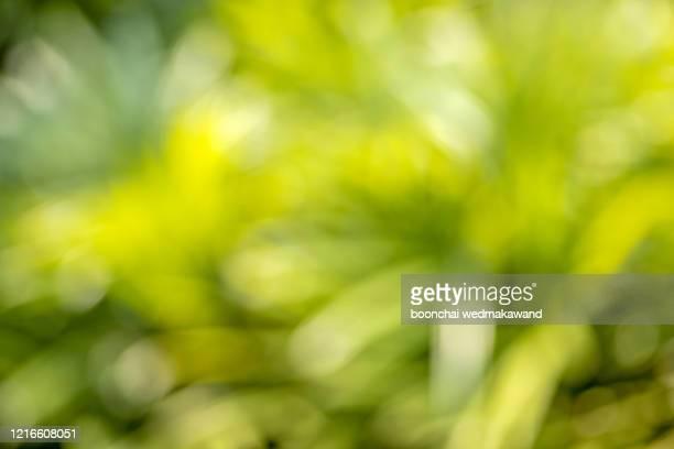 green blurred background and sunlight - focagem no primeiro plano imagens e fotografias de stock