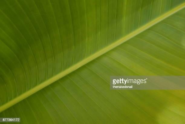 Green Botanics