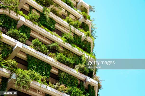 green building with vertical garden. - sustainability stock pictures, royalty-free photos & images