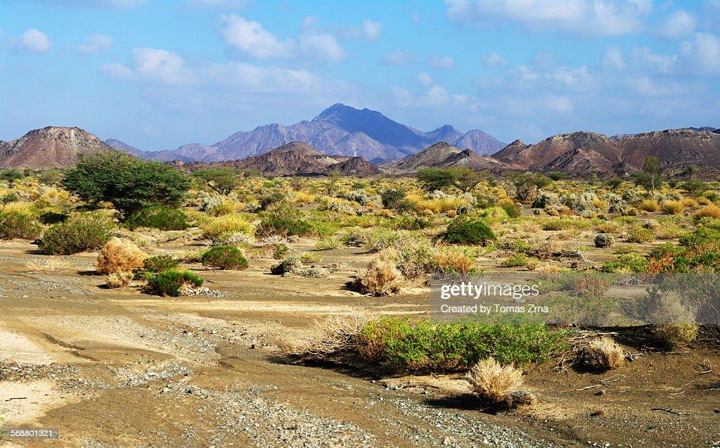 Green bush in the desert : Stock Photo