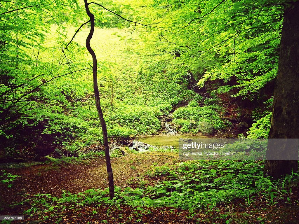 Green Bushes In Forest : Foto stock