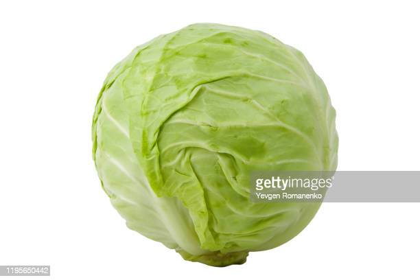 green cabbage isolated on white background - cavolo cappuccio verde foto e immagini stock
