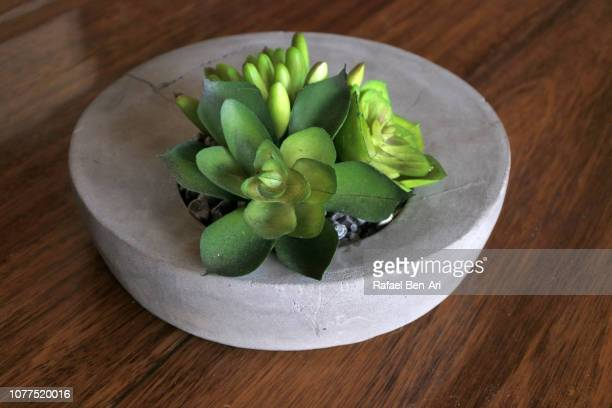 Green Cactus Plant in a Round Concrete Pot