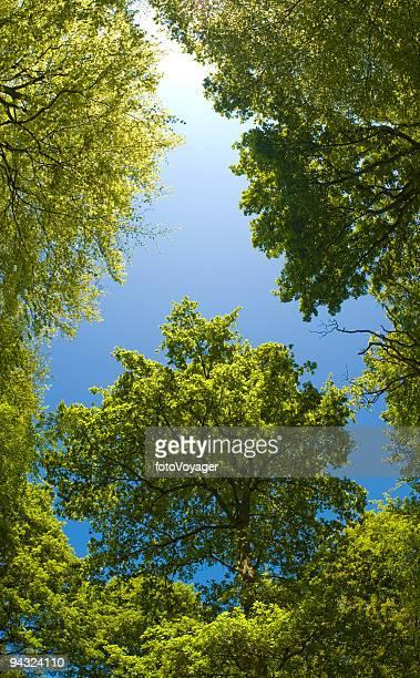 Green canopy, blue skies