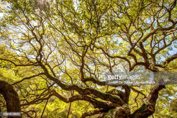 19 Angel Oak Park South Carolina Pictures, Photos & Images