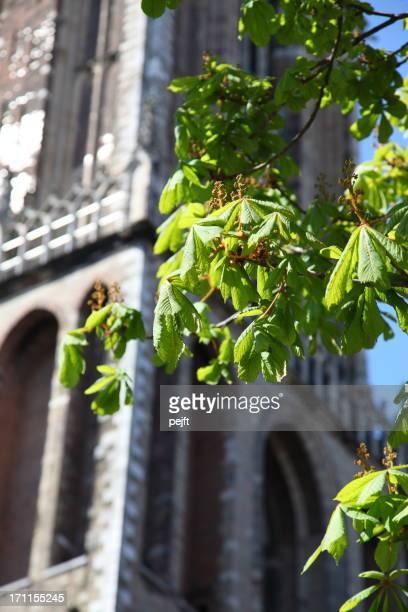 Green chestnut trees at spring in Utrecht Holland