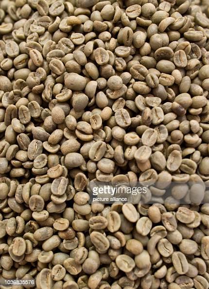 green coffee bean sverige