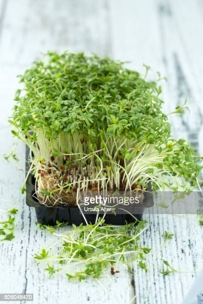 green cress on white background