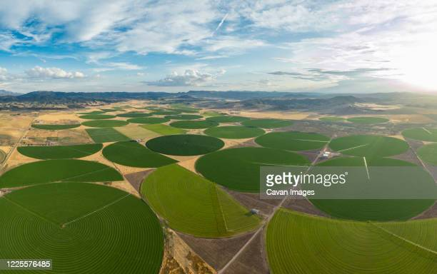 green crop circles grow in a remove nevada desert - nevada stock pictures, royalty-free photos & images