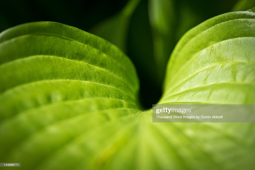 Green curves : Stock Photo