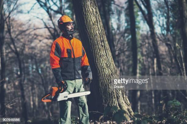 緑の経済は森林破壊のプロセスに対して