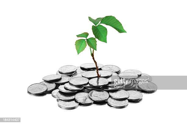 green economy - money tree stock photos and pictures