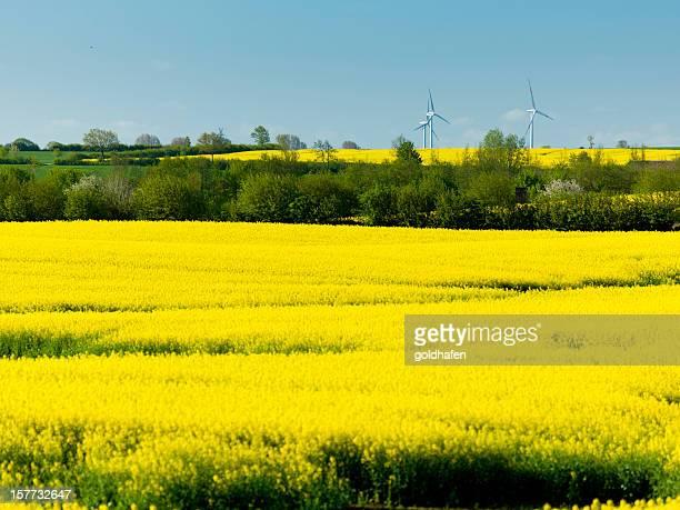 green energy, wind wheels in canola landscape