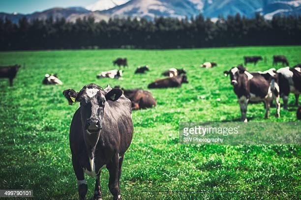 Green environmental field in New Zealand