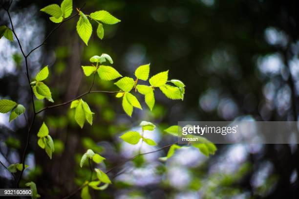 green feathers - mutsu imagens e fotografias de stock