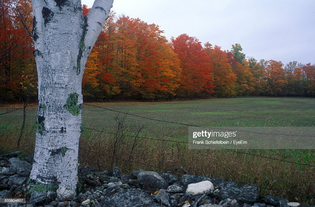 Green Field And Autumn Trees Behind Wire Fence : Foto stock