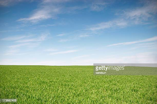Green field and blue skies landscape