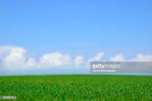 green field and blue sky - wide shot stock pictures, royalty-free photos & images