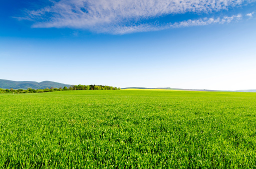 green field and blue sky 935551812