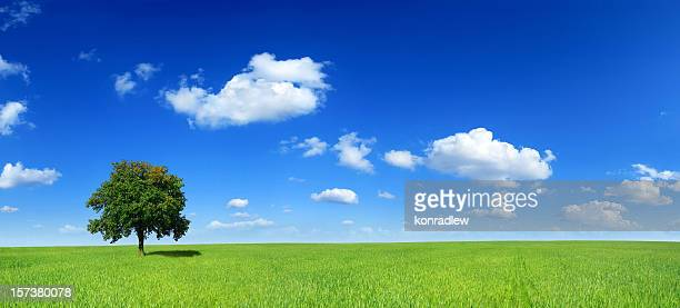 Green field and lonely tree - Landscape