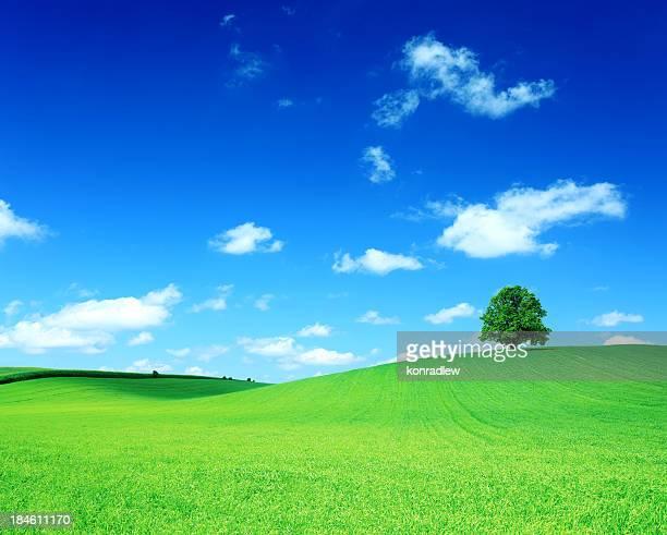 Green Field et l'arbre sur Hill-Paysage vallonné