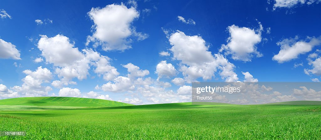 Green field and white clouds in the blue sky : Stock Photo