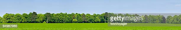 Green field forest background