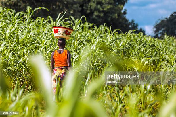 green field in west africa. - nigeria stock pictures, royalty-free photos & images