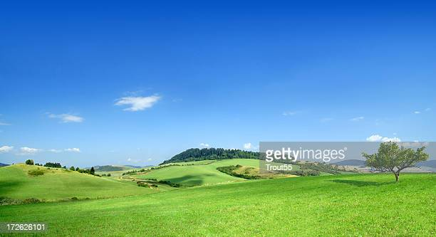 Green field landscape on a clear day