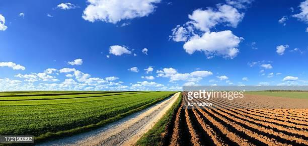 Grüne Feld Landschaft