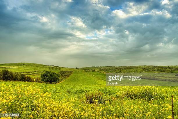 Green field near Nazareth, Israel