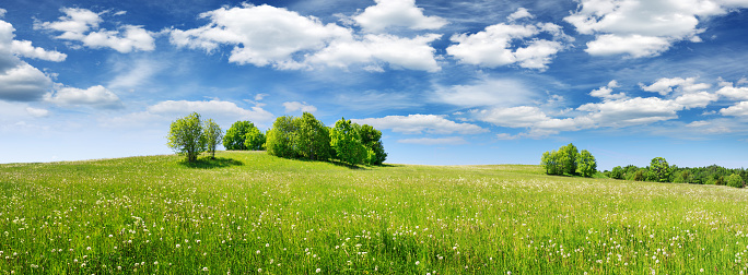 Green field panorama and blue sky with white clouds 1051151544